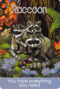 Raccoon -- Children's Spirit Animal Cards