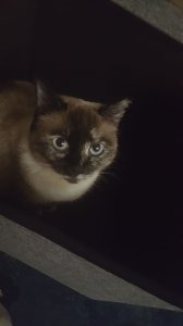 My cat again, this time in a box.
